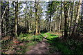 SE3002 : Bagger Wood by Tom Curtis