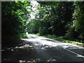 TL7591 : Forest Road Scene by Keith Evans