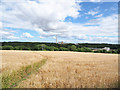 NZ2932 : Permissive path through barley field by Trevor Littlewood