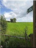 SS9707 : Footpath to Butterleigh by David Smith