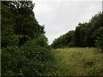 SK7259 : Gap between Mather Wood and Coppice Wood by Jonathan Thacker