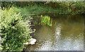 J4681 : Old mill pond, Crawfordsburn (August 2017) by Albert Bridge