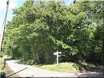 SS8711 : Horseclose Plantation, Highgate by David Smith