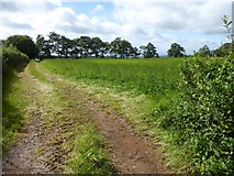 SS8811 : Tractor tracks on the edge of a field, east of Highgate by David Smith