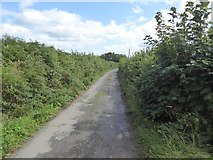 SS8910 : Hookway Lane by David Smith