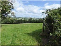 SS8910 : Field north of Hookway Lane by David Smith