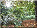 TQ2586 : Woodland in Golders Hill Park by David Howard