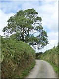 SS9011 : Tree at the bend in the road near Down Farm by David Smith