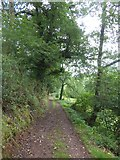 SS9110 : Track in woodland on west bank of Dart River by David Smith