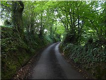 SS9009 : Hollow Devon lane near Kingdom's Corner by David Smith