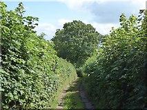 SS9109 : Larkey Lane by David Smith