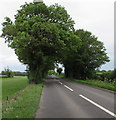 ST9998 : Tree canopy over the A429 near Kemble by Jaggery