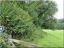 SS9307 : Footpath to Dart Cottages by David Smith