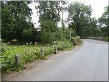 SS9307 : Wild flowers by the road to Dart Bridge by David Smith