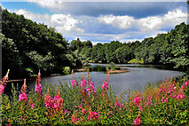 NY8383 : River North Tyne Bellingham by Tom Curtis