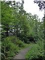 TQ5912 : Path in Park Wood by PAUL FARMER