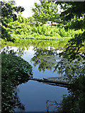 TQ0481 : The River Colne by Old Mill Farm by Mike Quinn