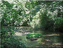 TQ0481 : The western arm of the River Colne west of Old Mill Lane by Mike Quinn