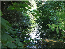 TQ0481 : Drain by the western arm of the River Colne west of Old Mill Lane by Mike Quinn