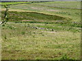 NJ4406 : A group of Greylag on Coynach Hill, week 3 August by Stanley Howe