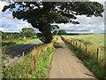NU2309 : The Northumberland Coast Path at Wooden Farm by John Allan