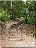 TQ1450 : Stepway up the North Downs scarp by Stefan Czapski
