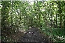 NN9357 : Woodland path, Pitlochry by Richard Webb