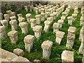 SP0513 : Pillar Hypocaust, Chedworth Roman Villa by Philip Halling