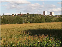SE2536 : Maize field in the Aire Valley by Stephen Craven