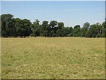 TQ0481 : Huntsmoor Park by Mike Quinn