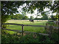 TQ4258 : Horse in a field by Marathon
