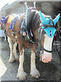 SP9315 : A cart horse by the cart shed at Pitstone Green Museum by Chris Reynolds