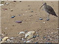NZ4153 : Curlew on the beach at Maiden's Flat by Mat Fascione