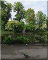 SK5640 : Nottingham Arboretum: lake and fountain by John Sutton