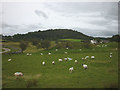SD4483 : Grazing sheep at Townend, Witherslack by Karl and Ali