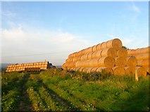 TQ0804 : Hay Bales, Ecclesden Farm by Simon Carey