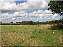 TM3795 : Fields west of Wash Lane by Evelyn Simak