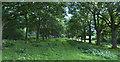 SJ3082 : Avenue like footpath by Ian Greig