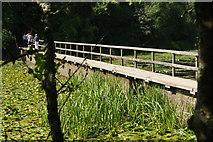 SR9694 : Bosherston Lily Ponds by Stephen McKay