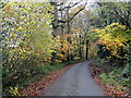 SX5997 : Autumn Colour by the roadside by Tony Atkin