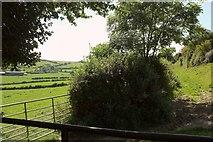 ST6501 : Path below Weam Common Hill by Derek Harper
