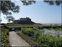 NU1341 : Lindisfarne Castle from Jekyll garden by norman griffin