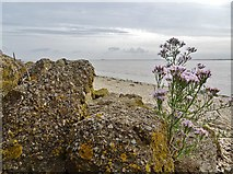 TA0225 : Humber Estuary by Bernard Sharp