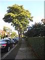 TQ2588 : Hampstead Way, Hampstead Garden Suburb by David Howard