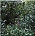 TQ0533 : Path Junction at Hope Rough by Chris Thomas-Atkin