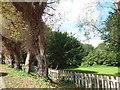 TQ4768 : Sandway Park from Sandway Road by Marathon