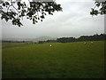 NT5616 : Pastureland near Dean Head by Karl and Ali