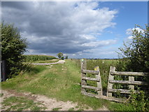 TQ5344 : The Eden Valley Walk in Penshurst Park by Marathon