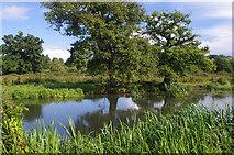 SU9947 : River Wey Navigation, near Shalford by Ian Taylor