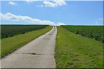TL5135 : Saffron Trail by N Chadwick